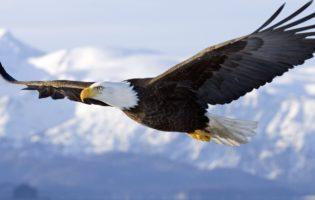 A águia não é o melhor simbolo de liderança