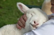 Empreendedor, sua cabeça funciona como a de uma ovelha (e isso é legal)