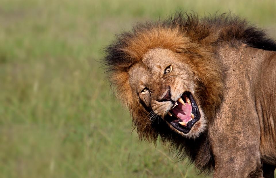 Imposto de renda: o Leão está de olho em você | Dinheirama