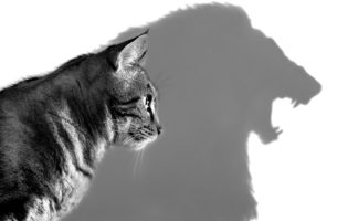 Imposto de Renda: hora de domar o leão