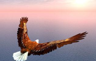 Você é águia ou galinha nos investimentos?