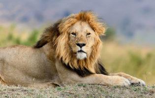 Dê o troco no Leão! Pague menos Imposto de Renda e fique mais rico