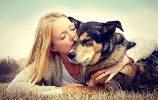 Animais de estimação: quanto você gasta com os seus?