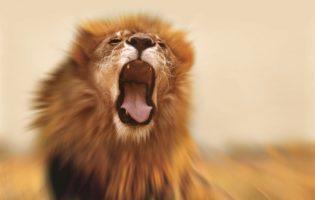 Previdência privada: como aliviar a mordida do Leão?