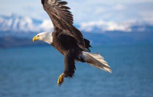 Um sistema que te fará enxergar os investimentos como uma Águia