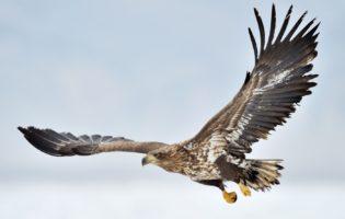 Juros baixos: um sistema que te fará voar como uma águia das ações
