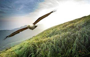 O momento que você buscava para se tornar uma águia dos investimentos