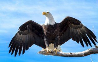 Alcance o sucesso investindo como uma águia dos investimentos